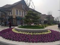 江苏绿化设计施工